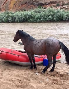 Wild Horse San Juan Raft Trip Utah